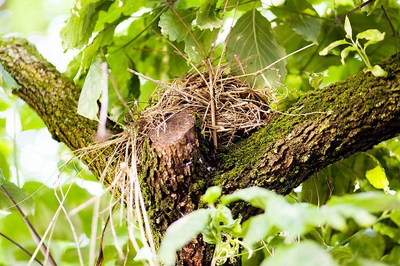 20090612 Nest_03