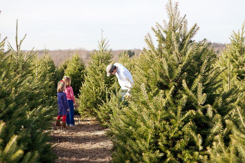 20111126 ChristmasTree_007