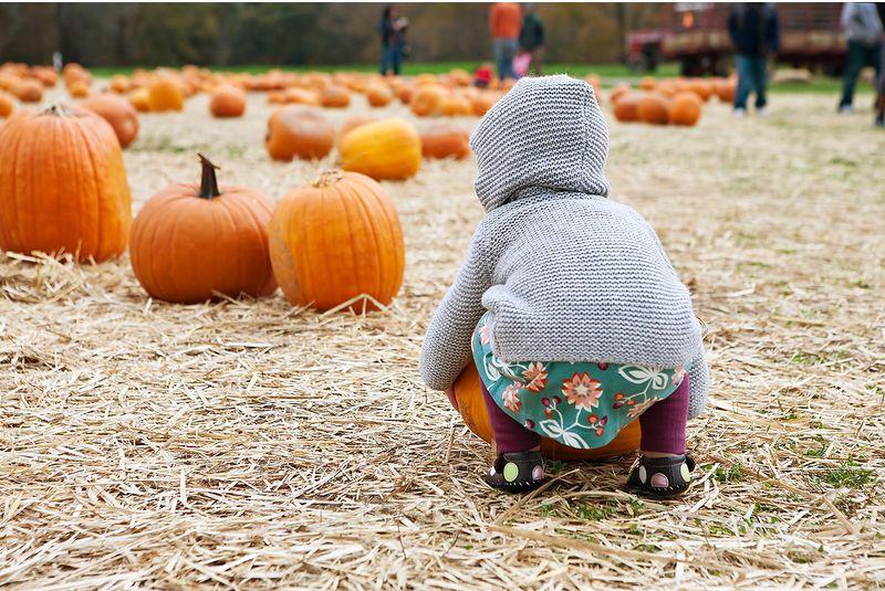 20111015 Pumpkins_003v2
