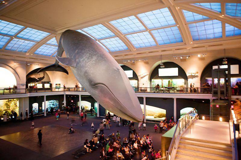 20120222 NaturalHistoryMuseum_013