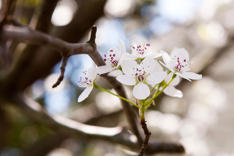 20120330 SpringBlossoms_001