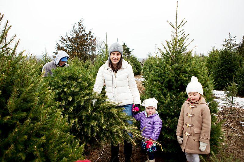 20121201_ChristmasTree_0016