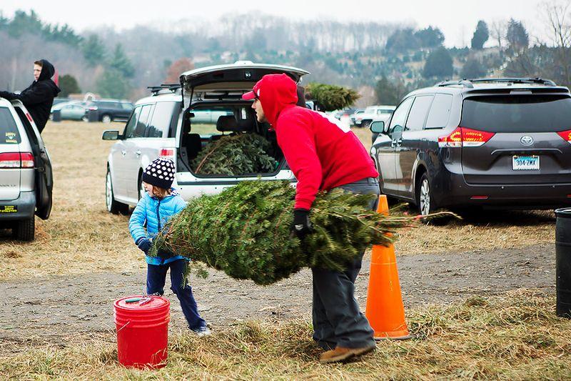 20121201_ChristmasTree_0030