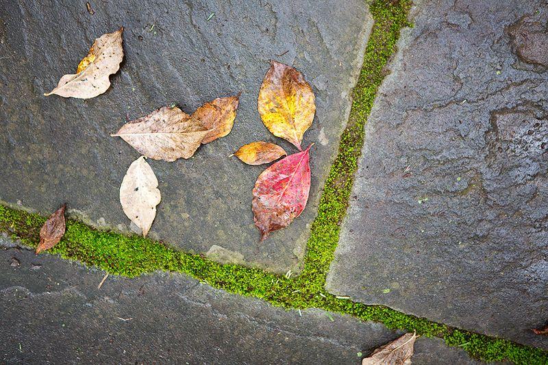 20121004 Leaves_001